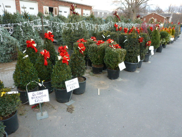 Check out the selection of Christmas Trees