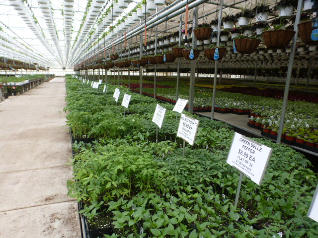 Vegtables and Herbs