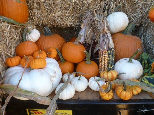 Pumpkins, Gourds and Seasonal Decorations