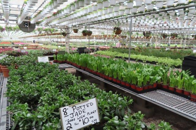 The Greenhouse if fully stocked with beautiful plants