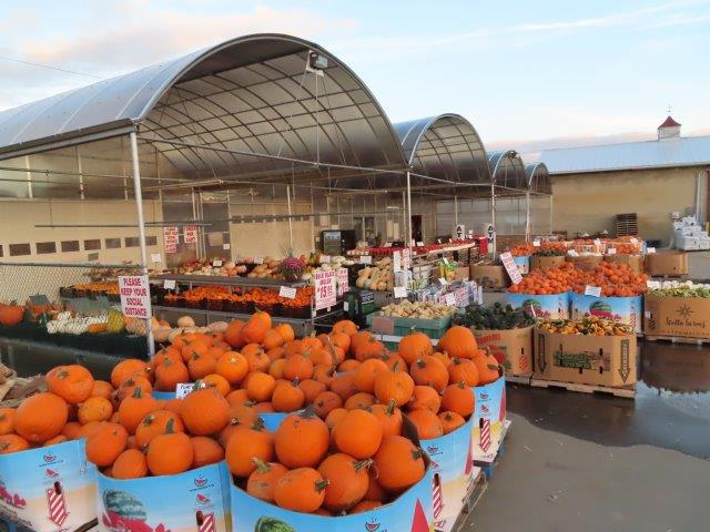 Pumpkins, Gourds, and Fall Decorations